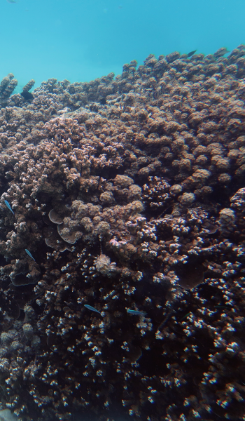 e5_coral_expedition_03
