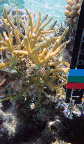 E5-Coral-August-2020-Expedition_04